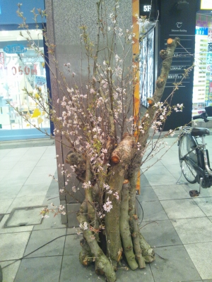 『桜プロジェクト』