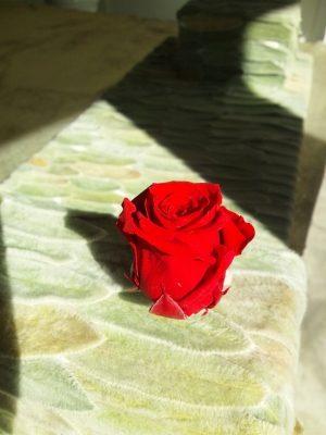 一本のバラの意味