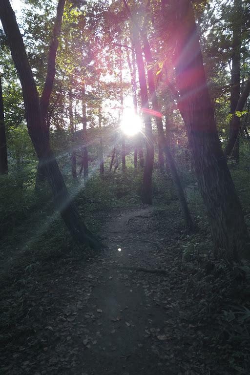 今日の森はメープルのにおい